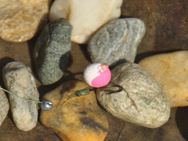 Doua culori si o captura importanta pe apa rece