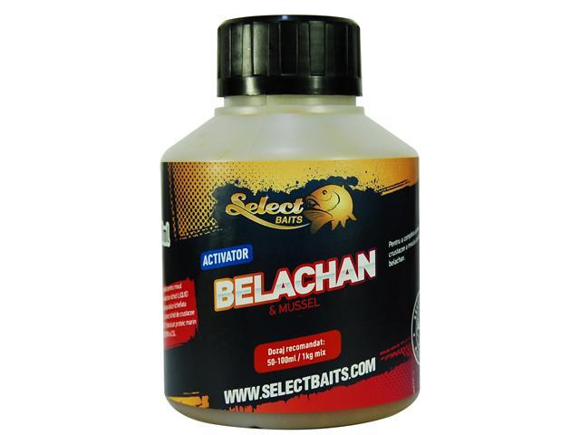 BELACHAN Activator